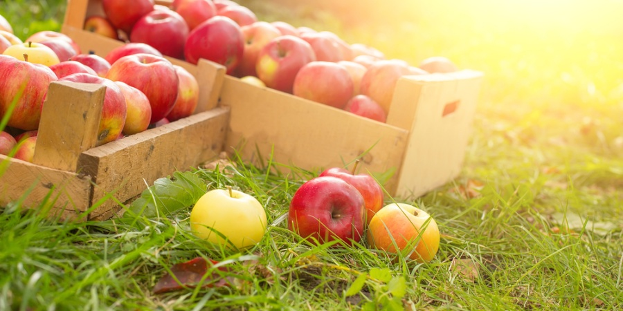 11 Reasons Why Apple Picking Is Actually TheBest