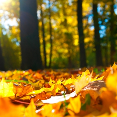 5 Non-White Girl Reasons To Love Fall