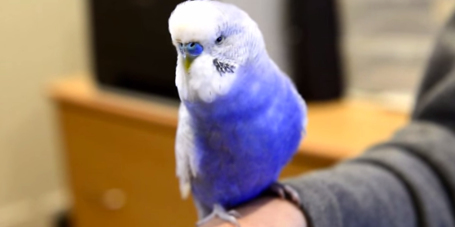 Watch This Little Bird Imitate R2-D2 (And It Sounds AbsolutelyIdentical)