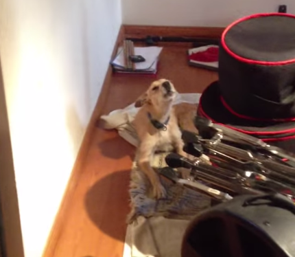 You Have To Stop What You're Doing Right Now To Watch This Dog Sing TheBlues