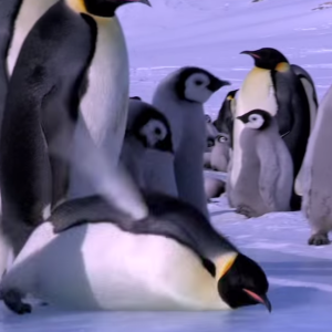 Here's A Montage Of Penguins Falling Down That Will Totally Brighten Your Day