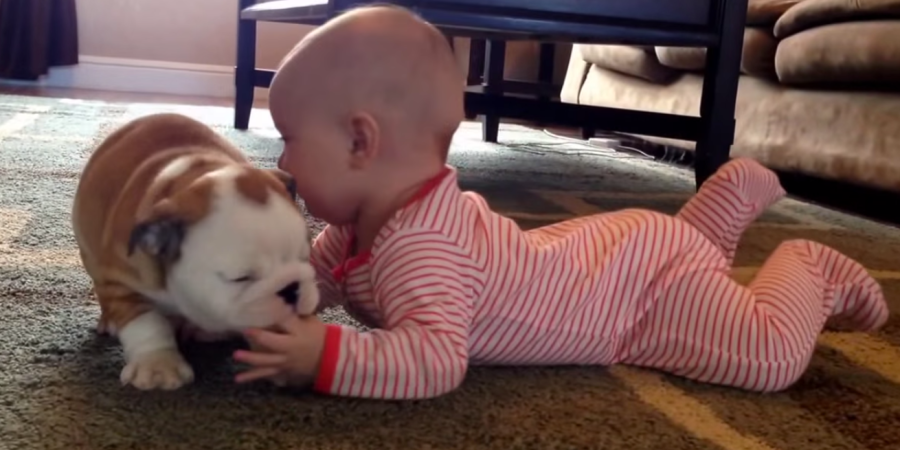 I Know You Want To Watch This Bulldog Puppy Kiss The Heck Out Of ThisBaby