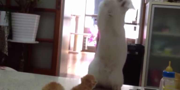 This Cat Can't Handle These Cute Kittens And Neither CanYou