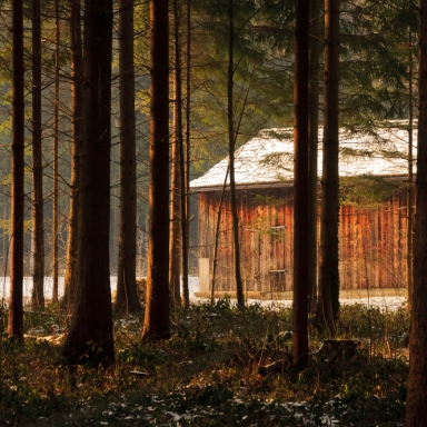 15 Things I Learned From Ditching NYC To Build A Cabin In The Woods