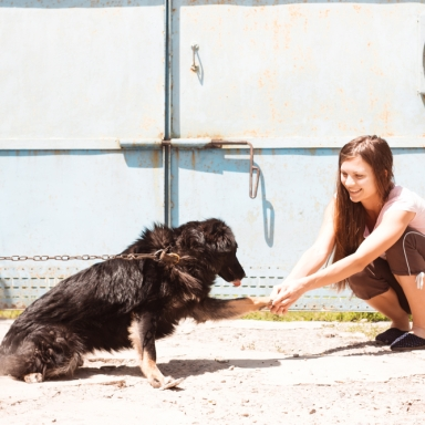 4 Things I Learned While Working At A Doggy Daycare