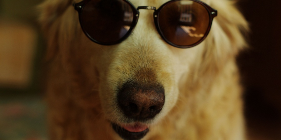 10 Different Kinds Of Dudes And Their Perfect DogCounterparts