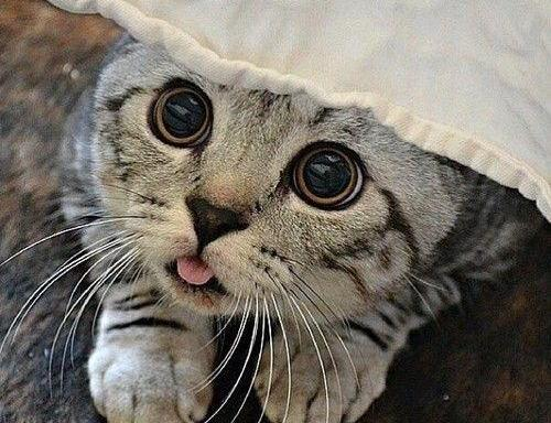 17 Ridiculously Cute Photos Of CatsBlepping