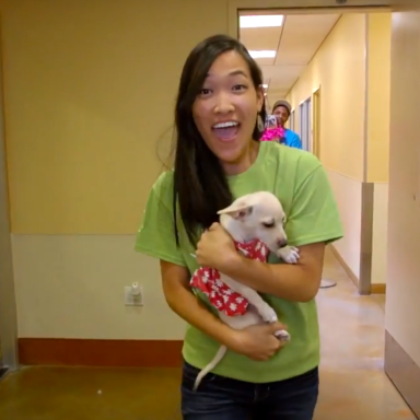 """Must Watch Lip Dub Of """"You Make My Dreams Come True"""" With Puppies And Kittens"""