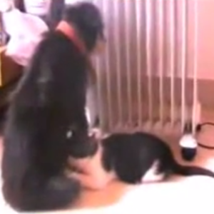 This Adorable Dog And Cat Friendship Will End Homophobia