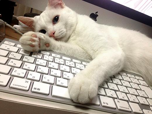 """Meet Setsu-chan, The Cat With The Best """"So Ugly It's Cute"""" Sleepy Face In TheWorld"""