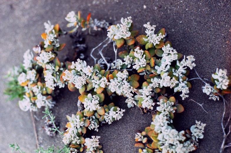 image - Flickr / lina bielinytė