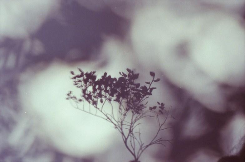 Flickr / lina bielinytė