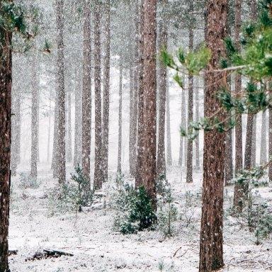 Benefits of Winter