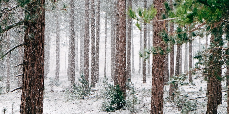 7 Hidden Benefits Of Winter