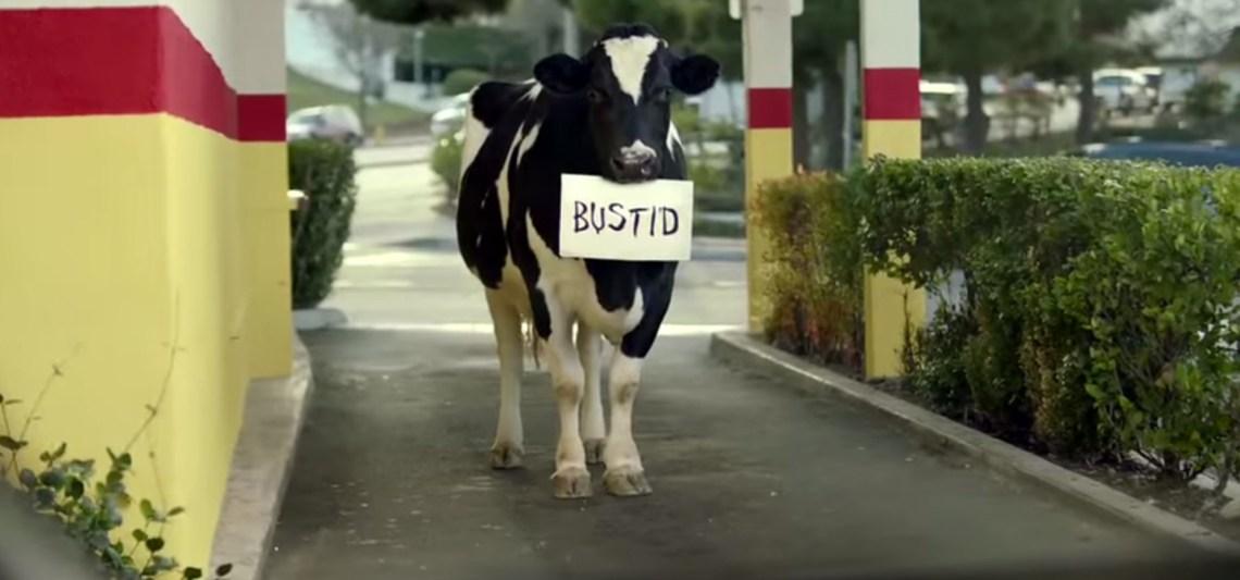 Eat Mor Chikin Cows