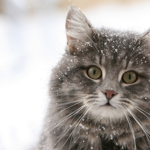 23 Seriously Deep Haikus That Will Reflect Your Winter Depression