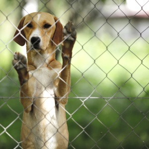 The Most Selfless Thing You Can Do For An Animal Is Adopt One