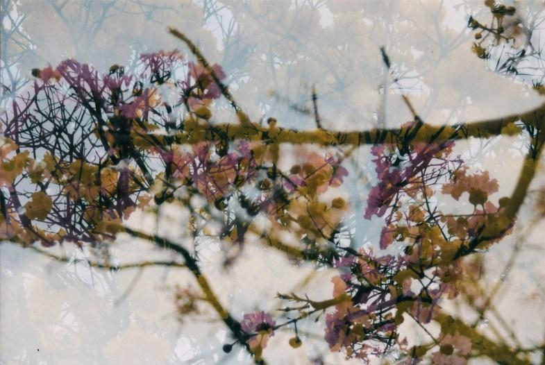 Flickr/Clara Araujo
