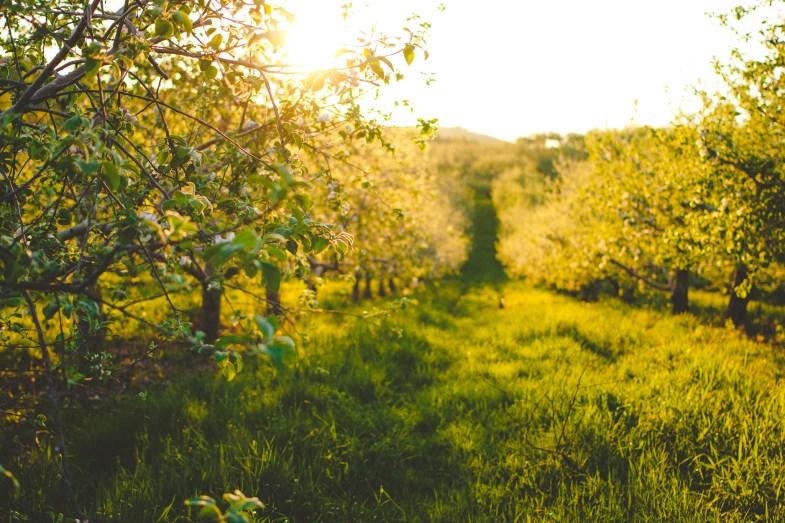 Flickr / Lulu Lovering