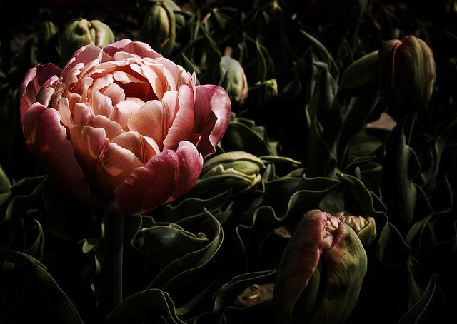 Flickr / Alagich Katya
