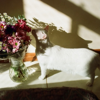 An Ode To All Future Cat Ladies: Why I'm Okay With Being Single