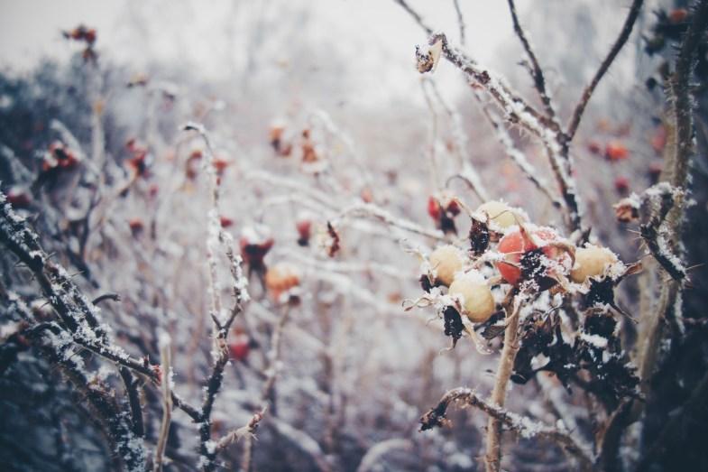 Flickr / Maria Morri