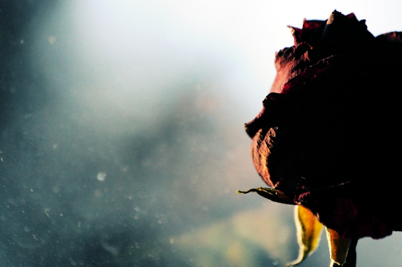 Flickr / Sophia Louise