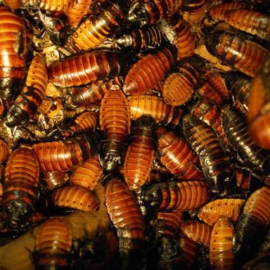 Vegan Restaurant Owner Allows Roach Infestation Over Moral Grounds