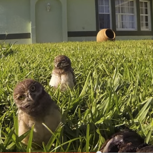 Watch: GoPro Hilariously Captures These Owls Having A Seriously Cute Dance Off