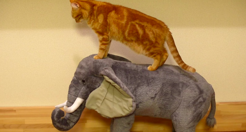 Watch: This Cat Thinks He's Actually Riding AnElephant!
