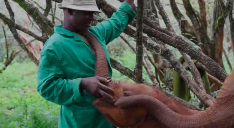New Life Goal: Baby ElephantWhisperer