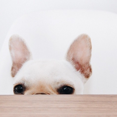 19 Photos Of French Bulldogs To Make Your Life Much, Much Better