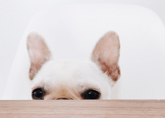19 Photos Of French Bulldogs To Make Your Life Much, MuchBetter