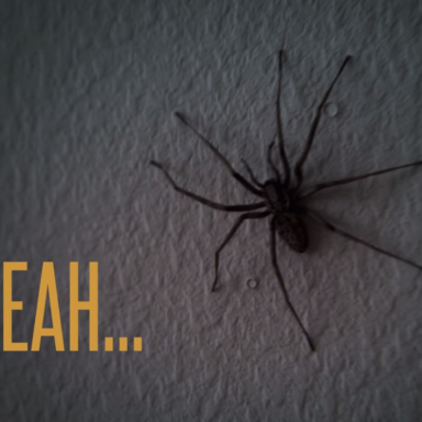 You Won't Believe What These Spiders Do After The Cameraman Hits The Wall