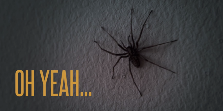 You Won't Believe What These Spiders Do After The Cameraman Hits TheWall