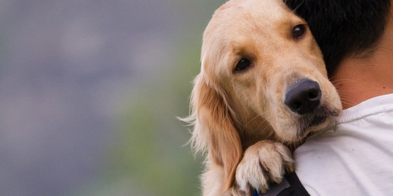 10 Life Lessons We Can Learn From OurDogs