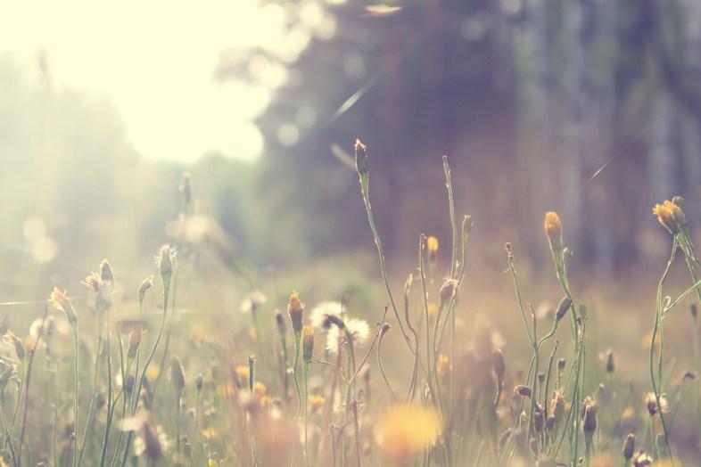 Shutterstock / nature photos
