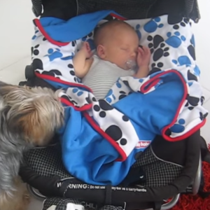 This Dog Tucking In Her Best Friend Is The Cutest Thing Ever