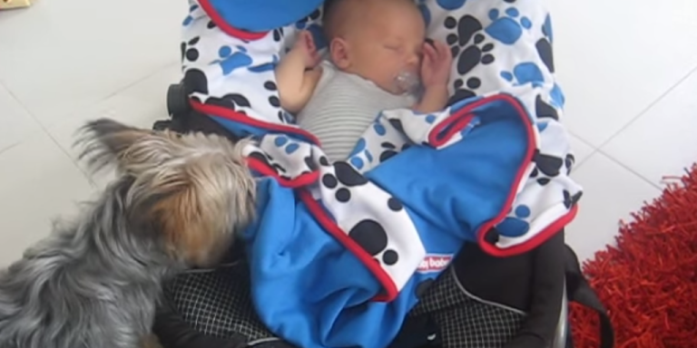 This Dog Tucking In Her Best Friend Is The Cutest ThingEver