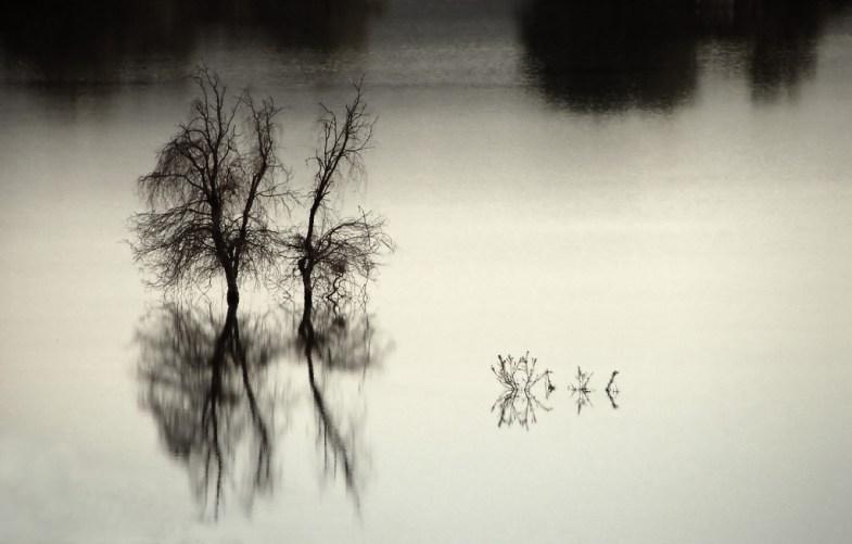 Flickr / Hamed Saber