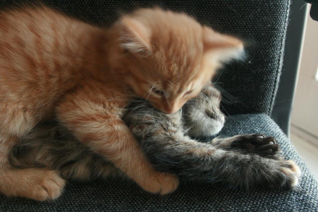 dating kittens ghidul lui gentleman pentru dating online