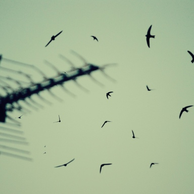 How I Know Birds Fly For Fun