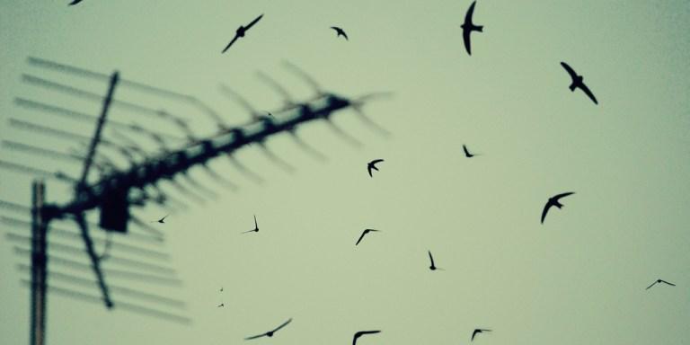 How I Know Birds Fly ForFun