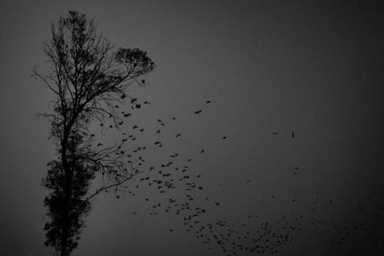 Flickr / Dino ahmad ali