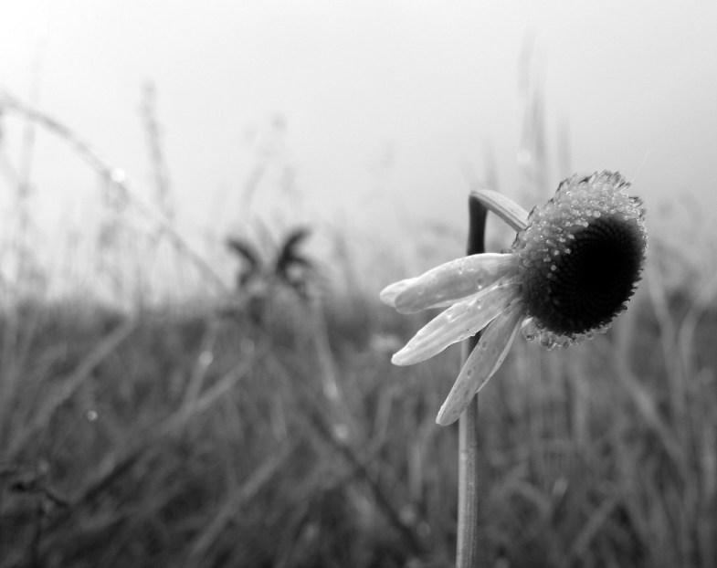 Flickr / frankieleon