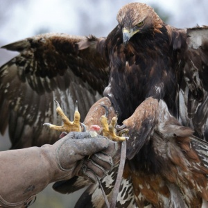 Middle-Aged Nature Lover Beats Falcon To Death With Her Beaded Scarf
