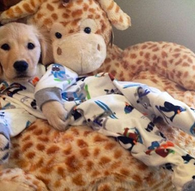 19 Photos Of Dogs In Pajamas That Will Overload You With Cuteness