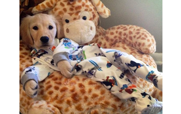19 Photos Of Dogs In Pajamas That Will Overload You WithCuteness