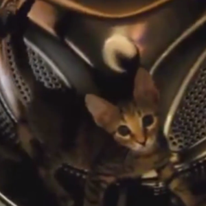 The Cat That Accidentally Invented The Cat Wheel…While In A Washing Machine