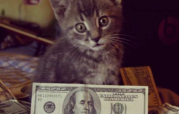 17 Adorable Cats That Will Always Be Richer Than You